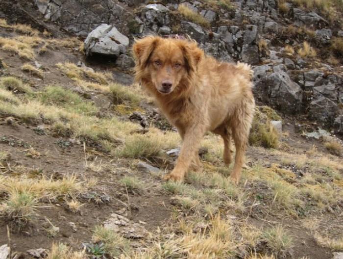 Vomit the Dog from Cordillera Huayhuash