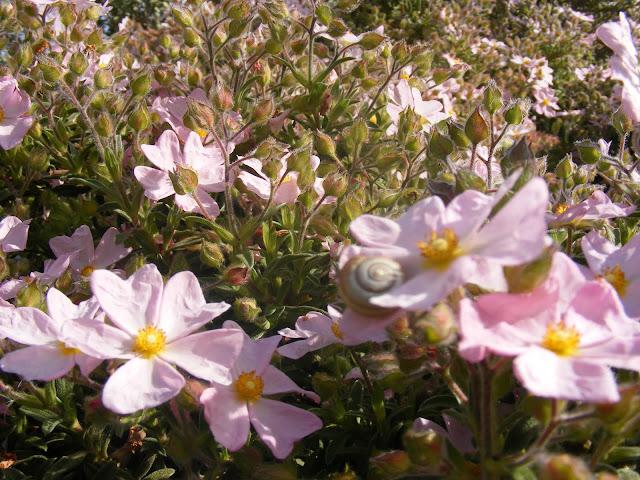 מאות פרחים ביום, עשרות אלפים בעונת פריחה.