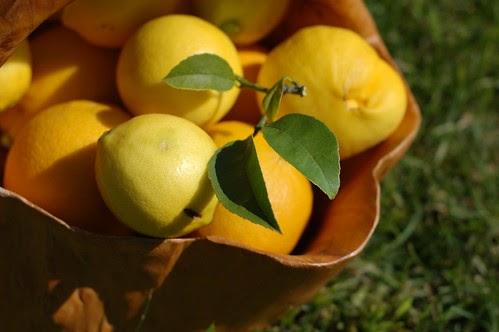 A Springy Citrus Treat Candied Meyer Lemon Bergamot