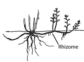 The Artist and New Media: THE RHIZOME