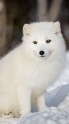 Beautiful Anime White Fox Wallpaper images