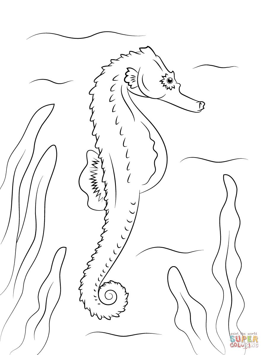 Malvorlage Seepferdchen