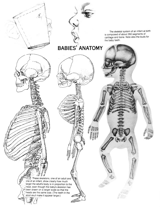 How Many Bones Does A Baby Have : bones, Bones, Newborn