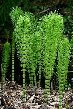 Manfaat Tumbuhan Paku Bagi Manusia : manfaat, tumbuhan, manusia, Ramuan, Sehat:, Manfaat, Tumbuhan, Kesehatan, Kehidupan, Manusia