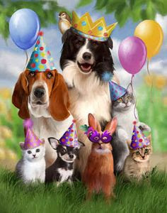 Happy Birthday Dog Lover : happy, birthday, lover, Happy, Birthday, Animal, Lover, Quotes