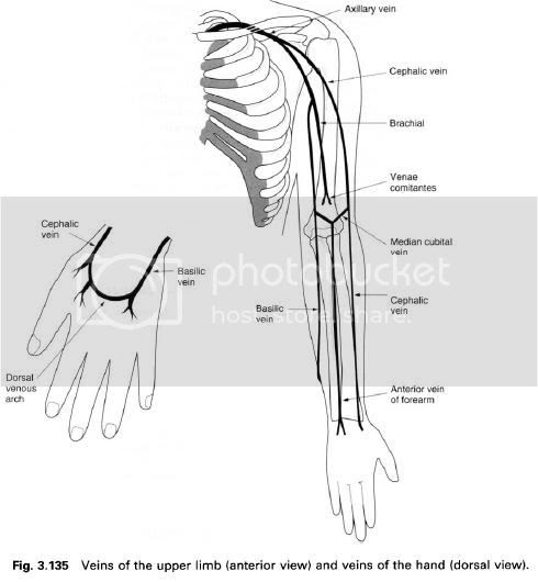 Complete Soccer Training: The veins of the upper body