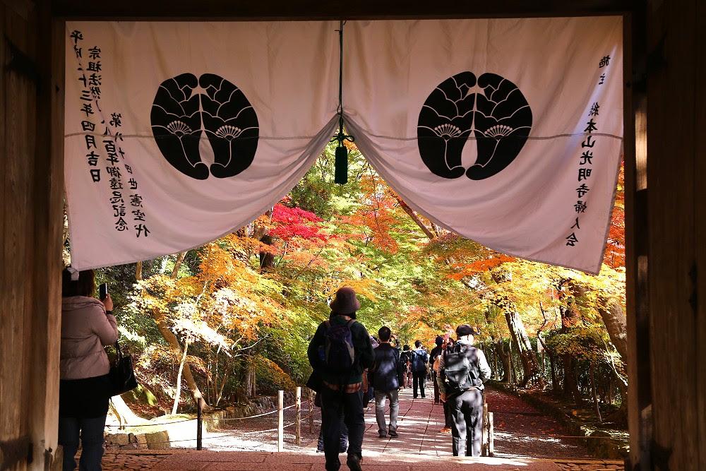 秋楓閃亮亮的京都光明寺 - 旅行途中