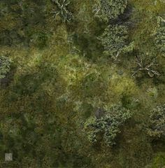 Forest Battle Map Dd World Map Atlas