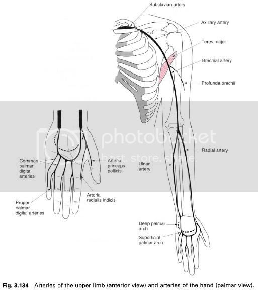 Complete Soccer Training: The arteries and pulses of the