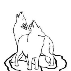 Cute Baby Wolves Drawings ~ Drawing Tutorial Easy
