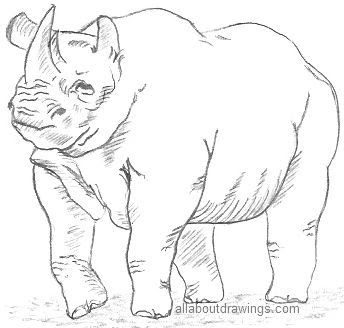 Pencil Drawing Images Animals