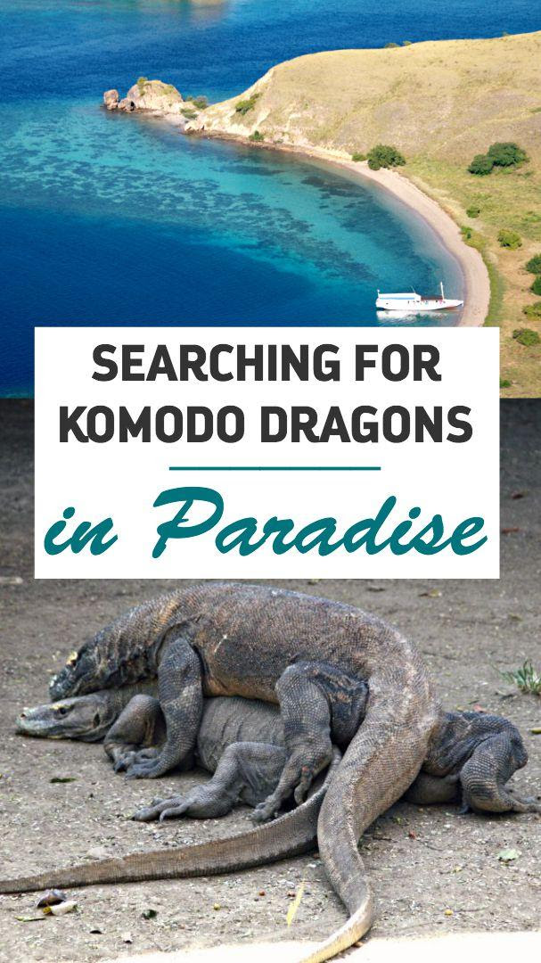 Komodo Dragon Sounds : komodo, dragon, sounds, Komodo, Dragon, Noises