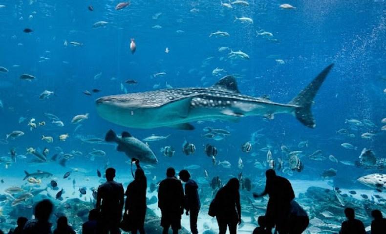 Georgia Aquarium 7