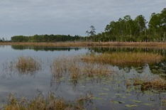 along the highway to Mt Dora