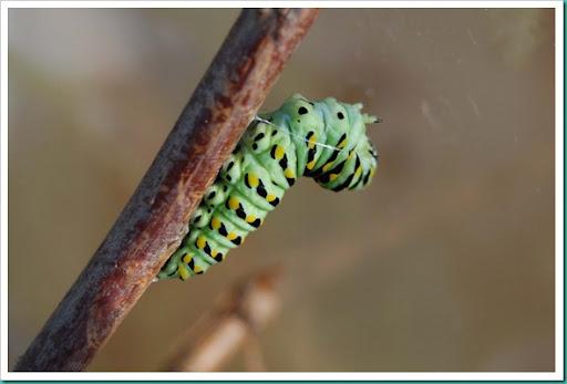 CaterpillarThread