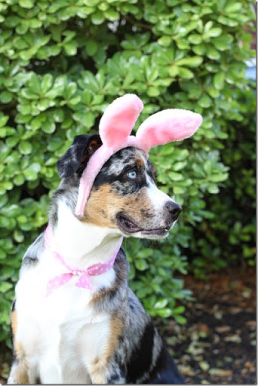 Ribbon and Bunny Ears Dog Costume for Easter