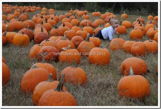 pumpkin patch north carolina