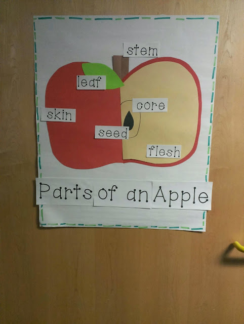 Apples And Pumpkins Back To Back So We Started With A A Venn Diagram