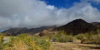 the desert 1_022DSC_0022
