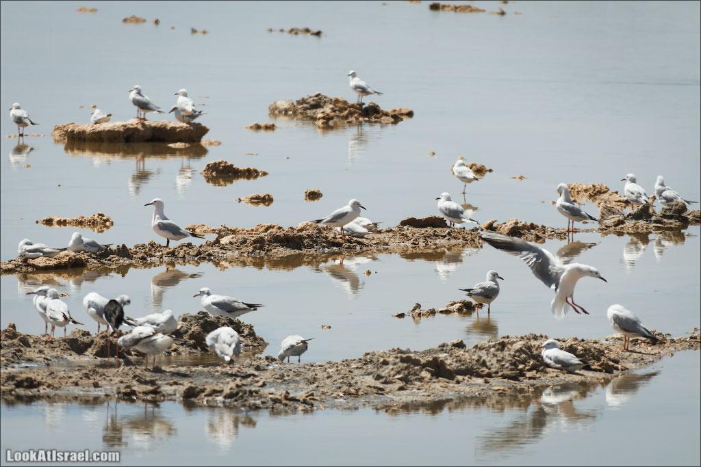 Озера с Фламинго | LookAtIsrael.com: Фото-блог о путешествиях по Израилю. Тель Авив, Иерусалим, Хайфа