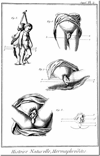hermafrodita (4)