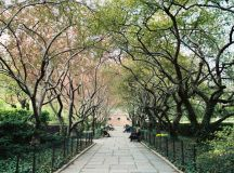 A Weekend in New York on Citysearch®