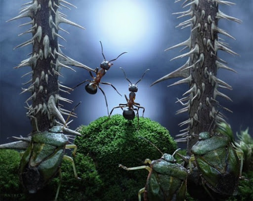 Life-of-Ants-Andrey-Pavlov-23