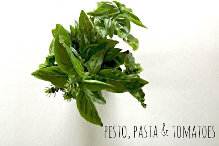 nesty crumbs pesto recipe image