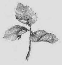 Menggambar Flora Fauna | TN Blogs
