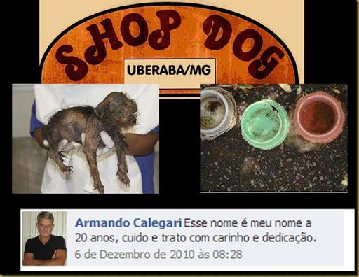 shopdog_maltrataanimais2