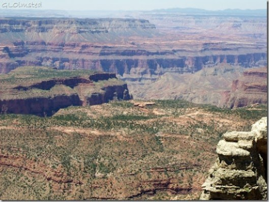 The Esplanade in Grand Canyon from Fence Point Kaibab National Forest Arizona