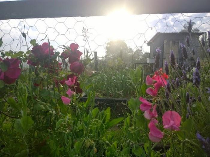 my garden oct 2014 (12)