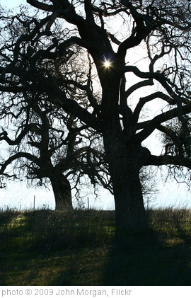 'Tree Silhouettes' photo (c) 2009, John Morgan - license: http://creativecommons.org/licenses/by/2.0/