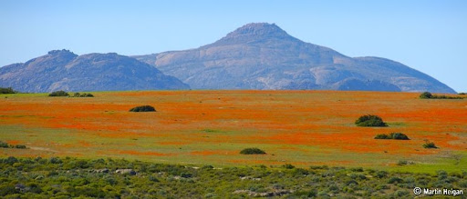 Namaqualand-flores-7