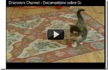 Vídeo Documentário Sobre Gatos Domésticos