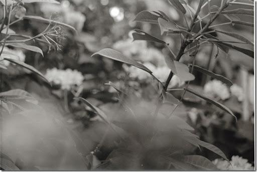 Botanical-Gardens-6-AP-56-Y-6-M-9