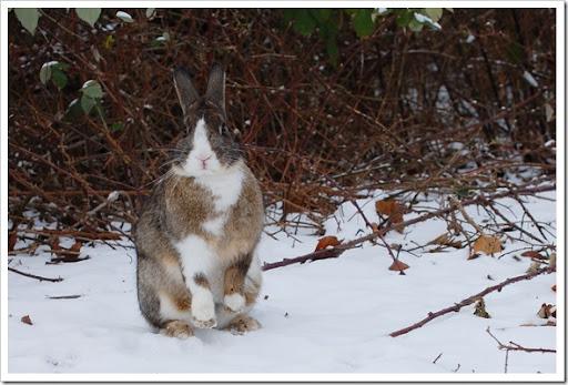 Rabbit up
