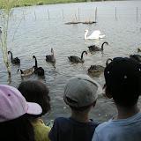 Gratie pe lac