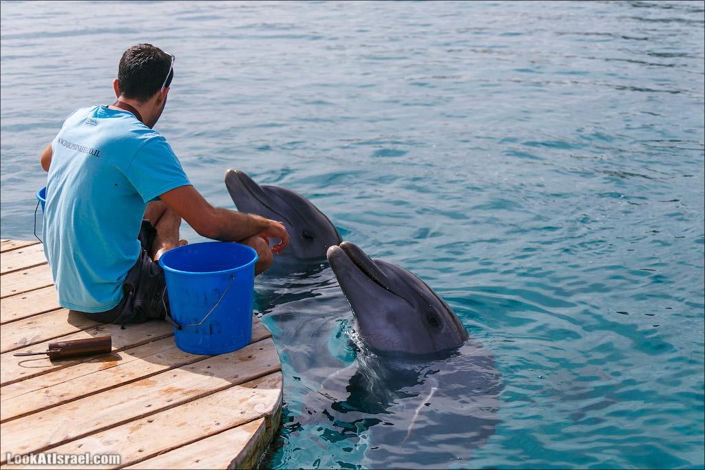 LookAtIsrael.com - Фото путешествия по Израилю | Дельфиний риф в Эйлате. Дельфинарий | Dolphins reef in Eilat | דולפינריום באילת
