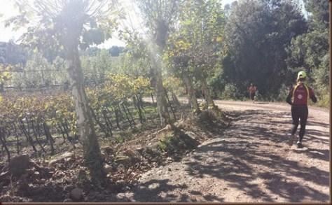correndo entre as vinícolas de Bento Gonçalves