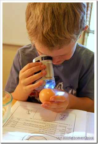 Cell Study ~ Our Aussie Homeschool