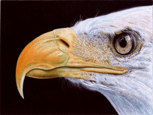 Desenho de águia feito com caneta BIC