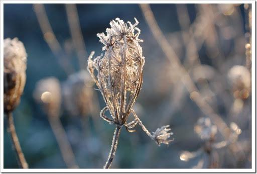 Frosty Morning (6)