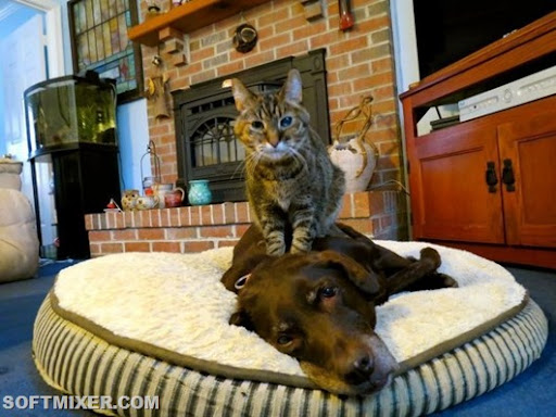 cat-massaging-a-dog