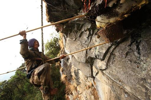 honey-cacciatori-nepal-27