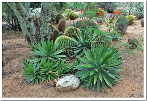 succulents and visit &