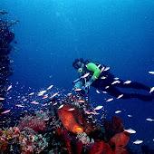 Bunaken-National-Marine-Park-in-Manado.jpg