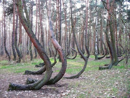 storto-foresta-4