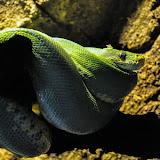 bioparc_snake.jpg