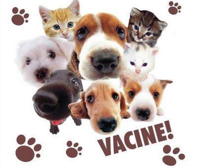 vacina antirrabica